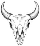 steer_skull